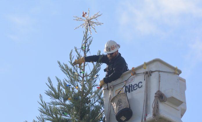 Christmas lights on Philomath tree