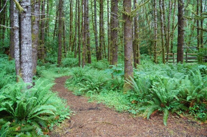 North up Horse Camp Trail