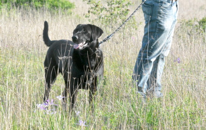 Dog at Lupine Meadows
